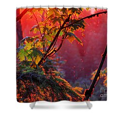 A Season's  Sunset Dusting Shower Curtain by Natalie Ortiz