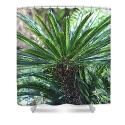 Shower Curtain featuring the photograph A Shady Palm Tree by Raphael Lopez