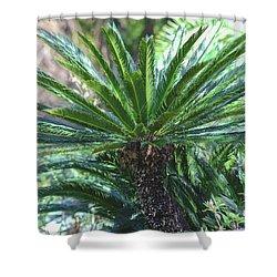 A Shady Palm Tree Shower Curtain