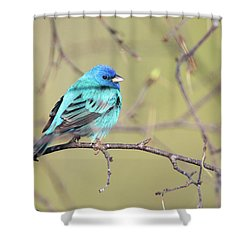 A Shiny Blue Gem Shower Curtain