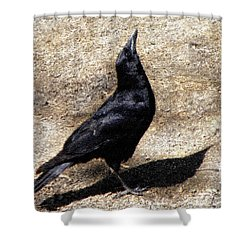 A Sighting Shower Curtain by Sandi OReilly