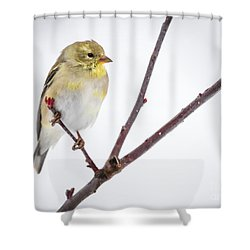 A Sign Of Spring Shower Curtain