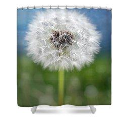 A Single Dandelion Seed Pod Shower Curtain