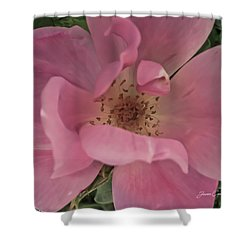 Shower Curtain featuring the photograph A Single Pink Rose by Joann Copeland-Paul