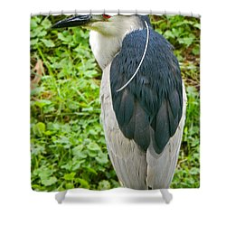 A Single Strand - Black-crowned Night Heron Shower Curtain