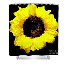 A Single Sunflower Shower Curtain by Merton Allen