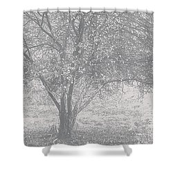 A Single Tree In Autumn In Grey And White Shower Curtain