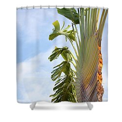 A Slice Of Nature Shower Curtain