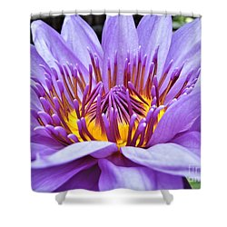 A Sliken Purple Water Lily Shower Curtain