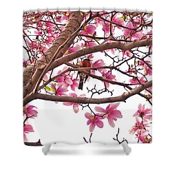 A Songbird In The Magnolia Tree Shower Curtain by Rona Black