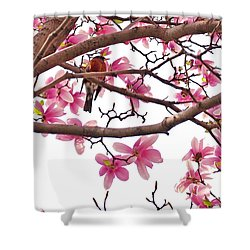 A Songbird In The Magnolia Tree - Square Shower Curtain