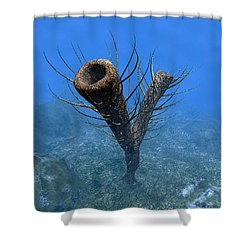 A Species Of Pirania, A Primitive Shower Curtain by Walter Myers
