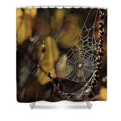 A Spiders Creation Shower Curtain by Karol Livote
