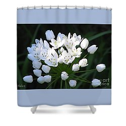 Shower Curtain featuring the photograph A Spray Of Wild Onions by Felipe Adan Lerma