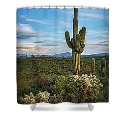 Shower Curtain featuring the photograph A Spring Evening In The Sonoran  by Saija Lehtonen