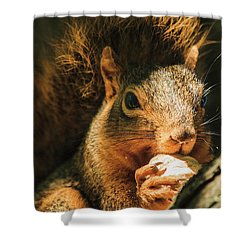 A Squirrel And His Nut Shower Curtain