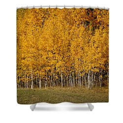 A Stand Of Aspen Shower Curtain
