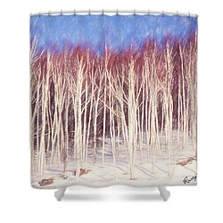 A Stand Of White Birch Trees In Winter. Shower Curtain