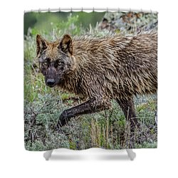 A Star In Lamar Shower Curtain by Yeates Photography