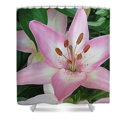 A Star Of Day Shower Curtain by Jeanette Oberholtzer