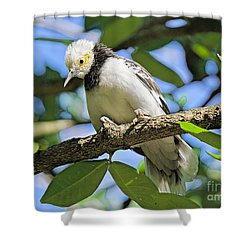 A Starling To Remember Shower Curtain