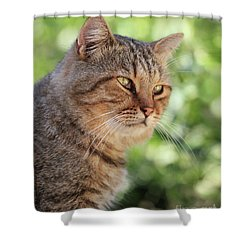 A Stray Cat In A Garden Shower Curtain by Stephan Grixti
