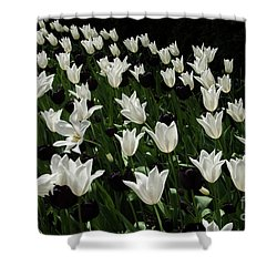 A Study In Black And White Tulips Shower Curtain