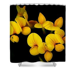 A Study In Yellow Shower Curtain by David Lane