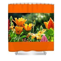 A Summer Celebration Shower Curtain by Angela Davies