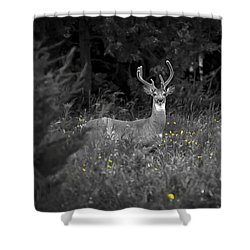A Summer Day Shower Curtain