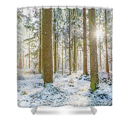 Shower Curtain featuring the photograph A Sunny Day In The Winter Forest by Hannes Cmarits