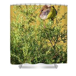 A Tad Ruffled Shower Curtain