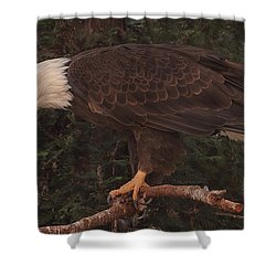 Shower Curtain featuring the photograph A Tasty Morsel  by Brian Cross