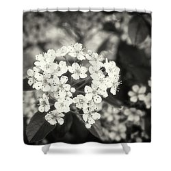 A Thousand Blossoms In Sepia 3x4 Flipped Shower Curtain