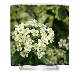 A Thousand Blossoms Shower Curtain