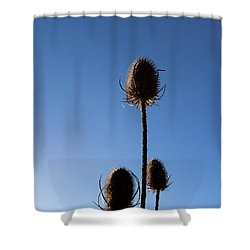 A Thriving Trio 2 Shower Curtain