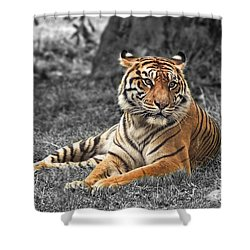 A Tiger Relaxing On A Cool Afternoon II Shower Curtain