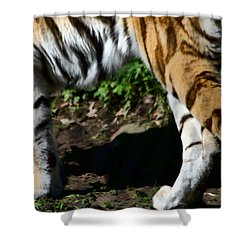 A Tigers Stride Shower Curtain by Karol Livote
