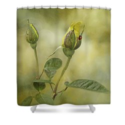 A Touch Of Class Shower Curtain by Diane Schuster