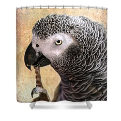 A Touch Of Grey 11 Shower Curtain