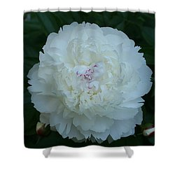 Shower Curtain featuring the digital art A Touch Of Pink by Barbara S Nickerson
