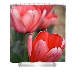 Shower Curtain featuring the photograph A Touch Of Spring by Suzanne Oesterling
