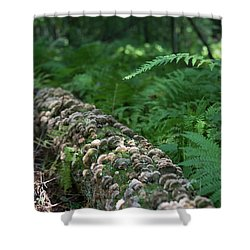 A Touch Of Sun Shower Curtain
