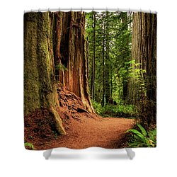 Shower Curtain featuring the photograph A Trail In The Redwoods by James Eddy