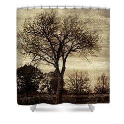 A Tree Along The Roadside Shower Curtain