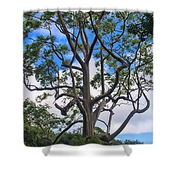 Shower Curtain featuring the photograph A Tree In Paradise by DJ Florek