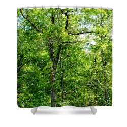 A Tree In The Woods At The Hacienda  Shower Curtain by David Lane