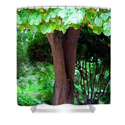 Shower Curtain featuring the photograph A Tree Lovelier Than A Poem by Madeline Ellis