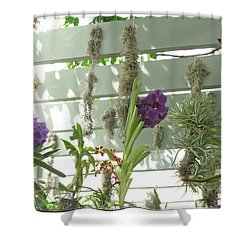 A Trio Of Orchids Shower Curtain