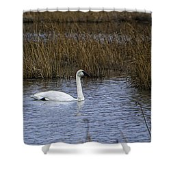 A Trio Of Swans Shower Curtain